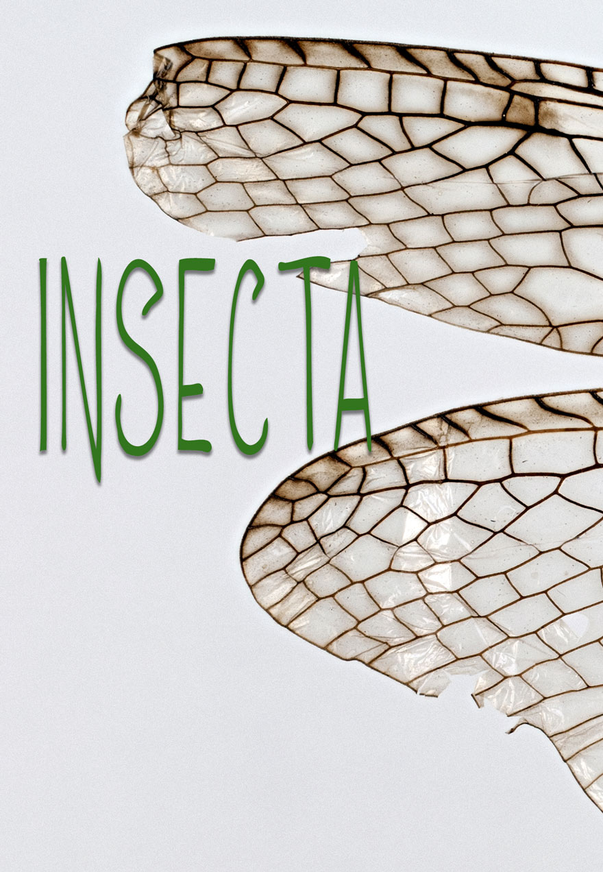 Insecta Film Cover Image