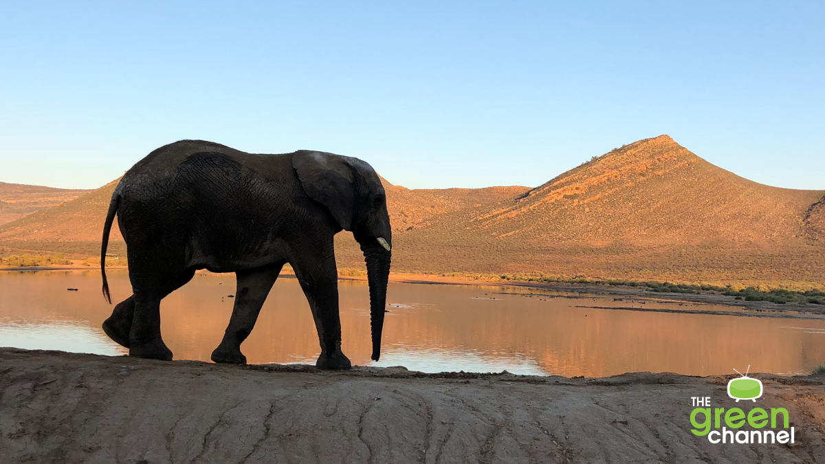 Image of elephant in Africa