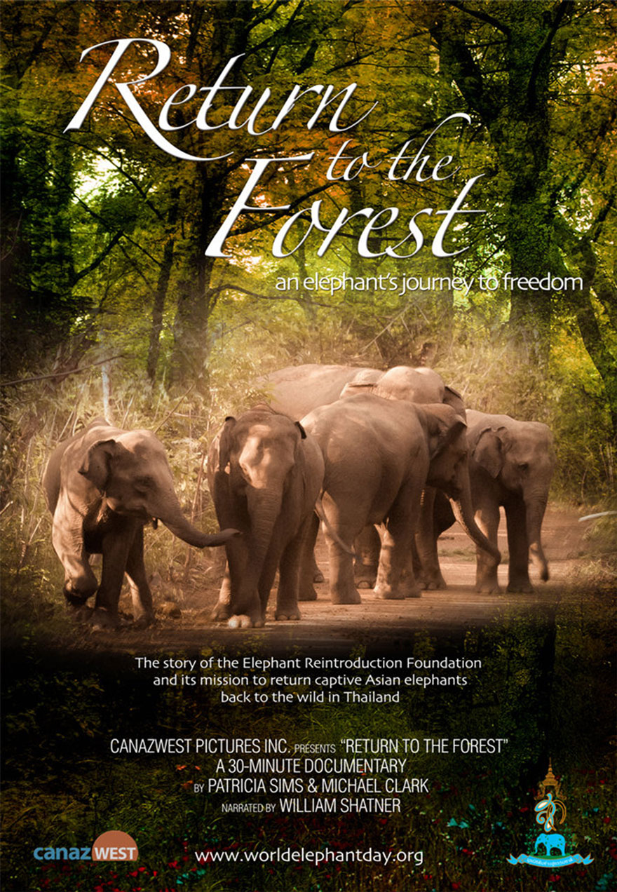 Return to the Forest Film Cover Image