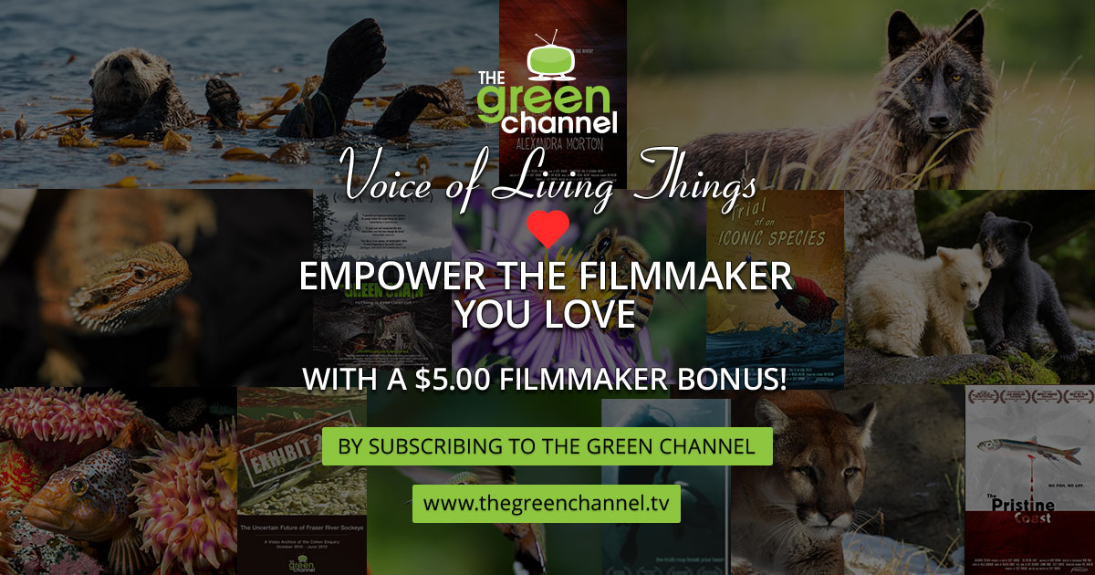Empower the Filmmaker you LOVE with a $5.00 Filmmaker Bonus by Subscribing to The Green Channel