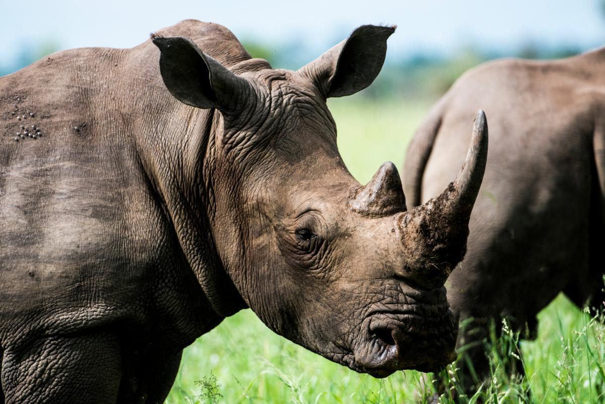 Photo of a rhino