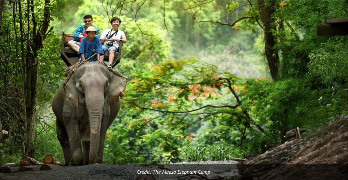 Photo of tourists riding an elephant in the Maesa Elephant Camp