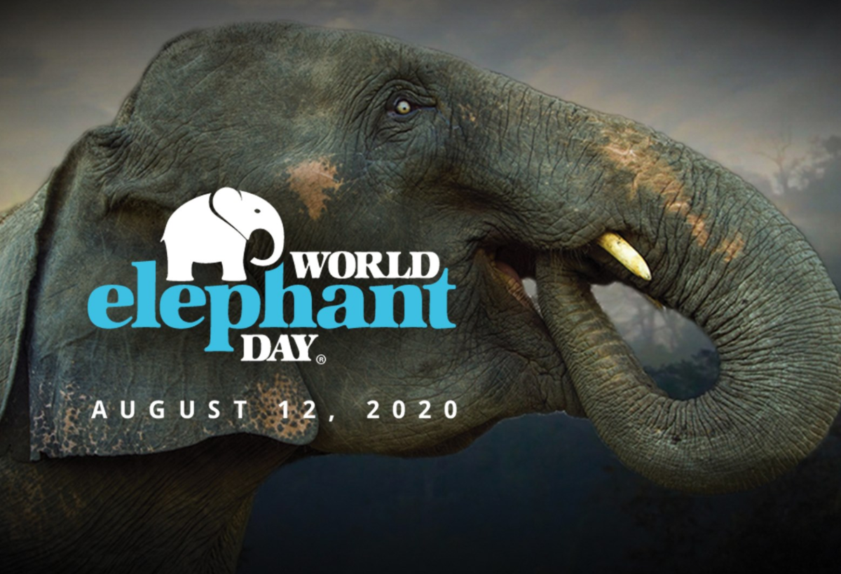 World Elephant Day August 12, 2020 Image