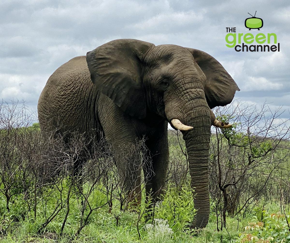 World Elephant Day 2021 Image