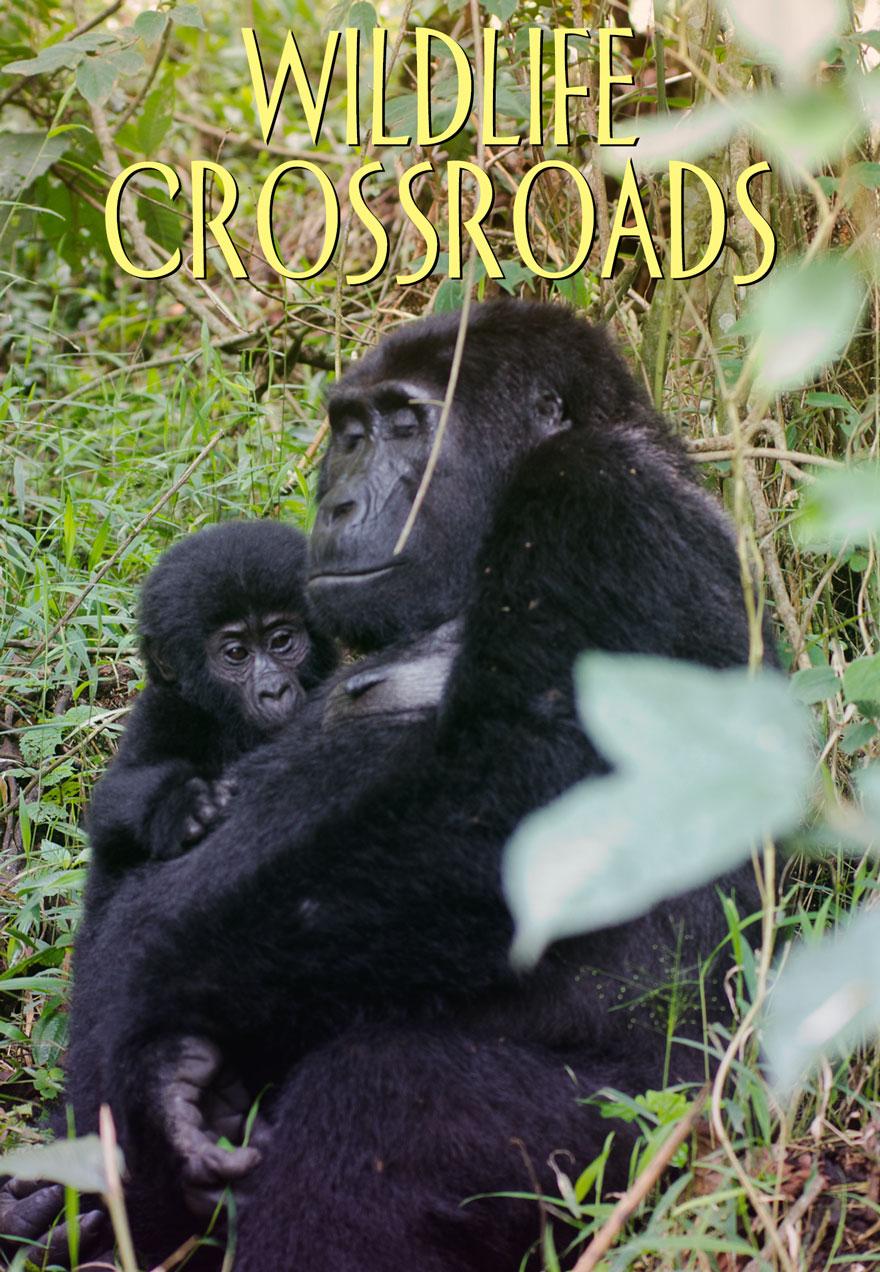 Wildlife Crossroads series poster