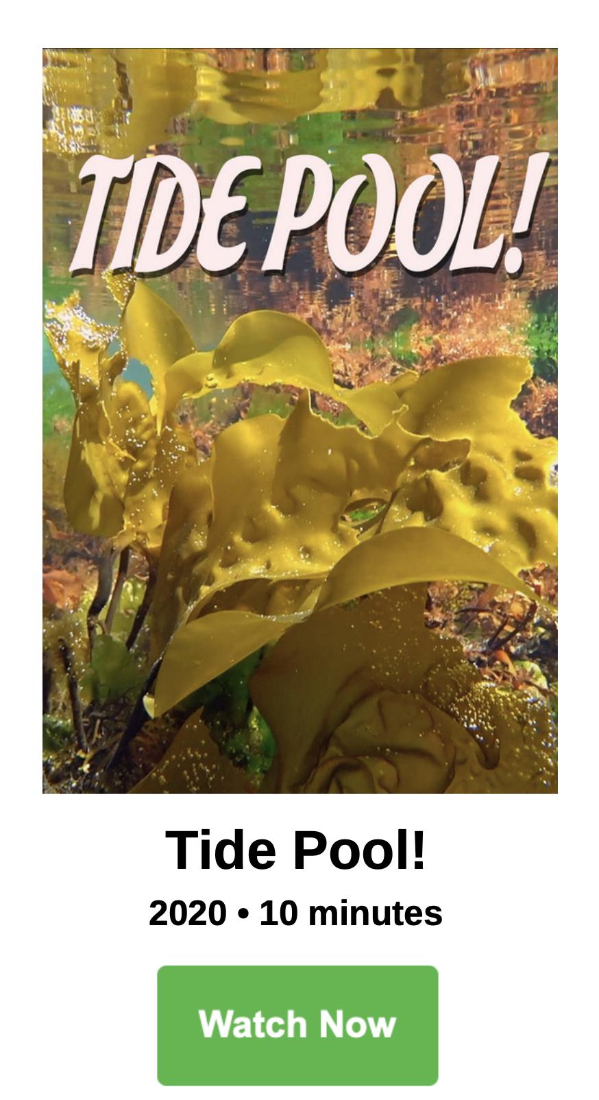 Tide Pool!
