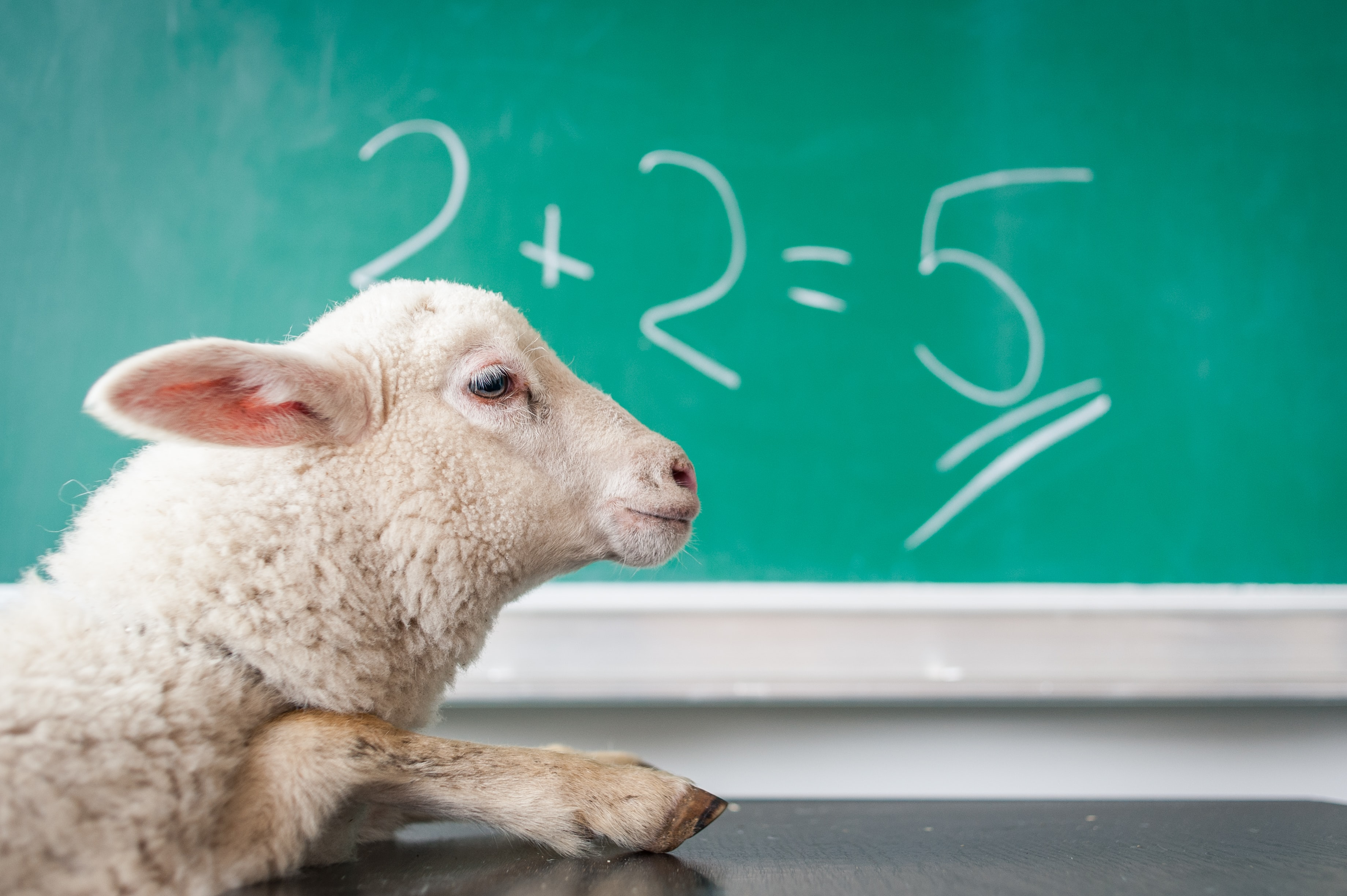 sheep in front of a blackboard that says 2+2=5