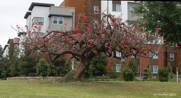A tree near the American Heart Association building on Campus Drive. Photo by Ian Parker