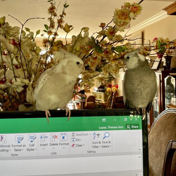 Photo of birds sitting on laptop