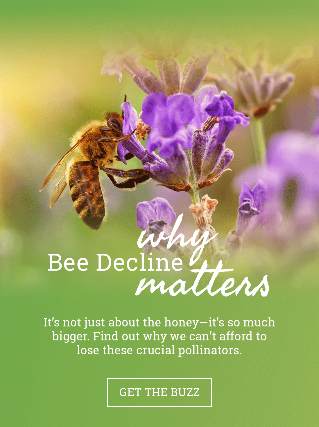 Bee decline is a serious, global issue. Find out why.