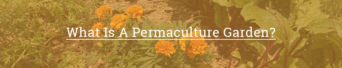 What Is A Permaculture Garden?