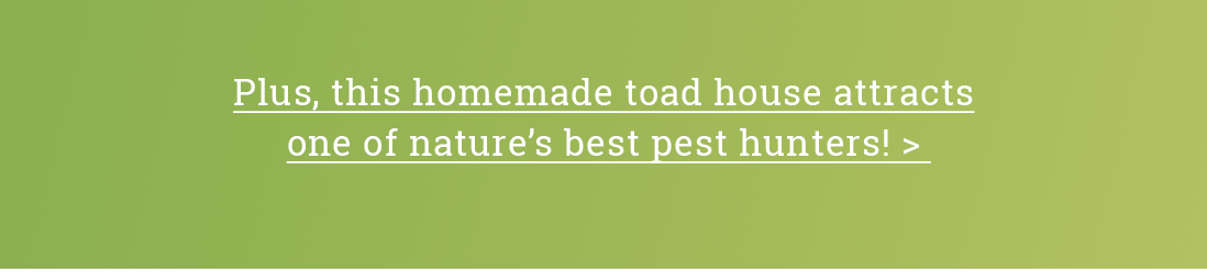 Plus, this homemade toad house attracts one of nature's best pest hunters!