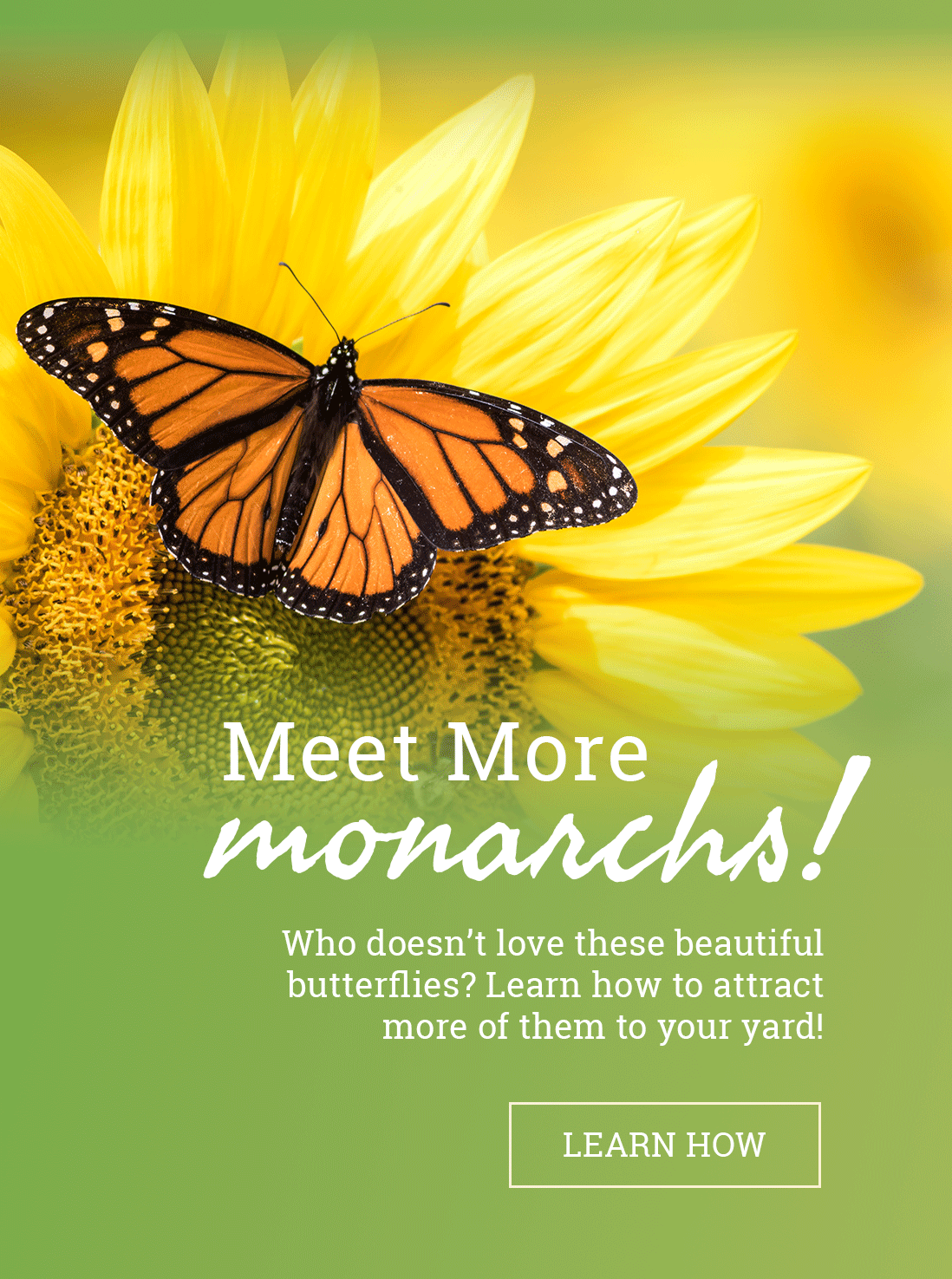 Attract this famous pollinator to your garden!