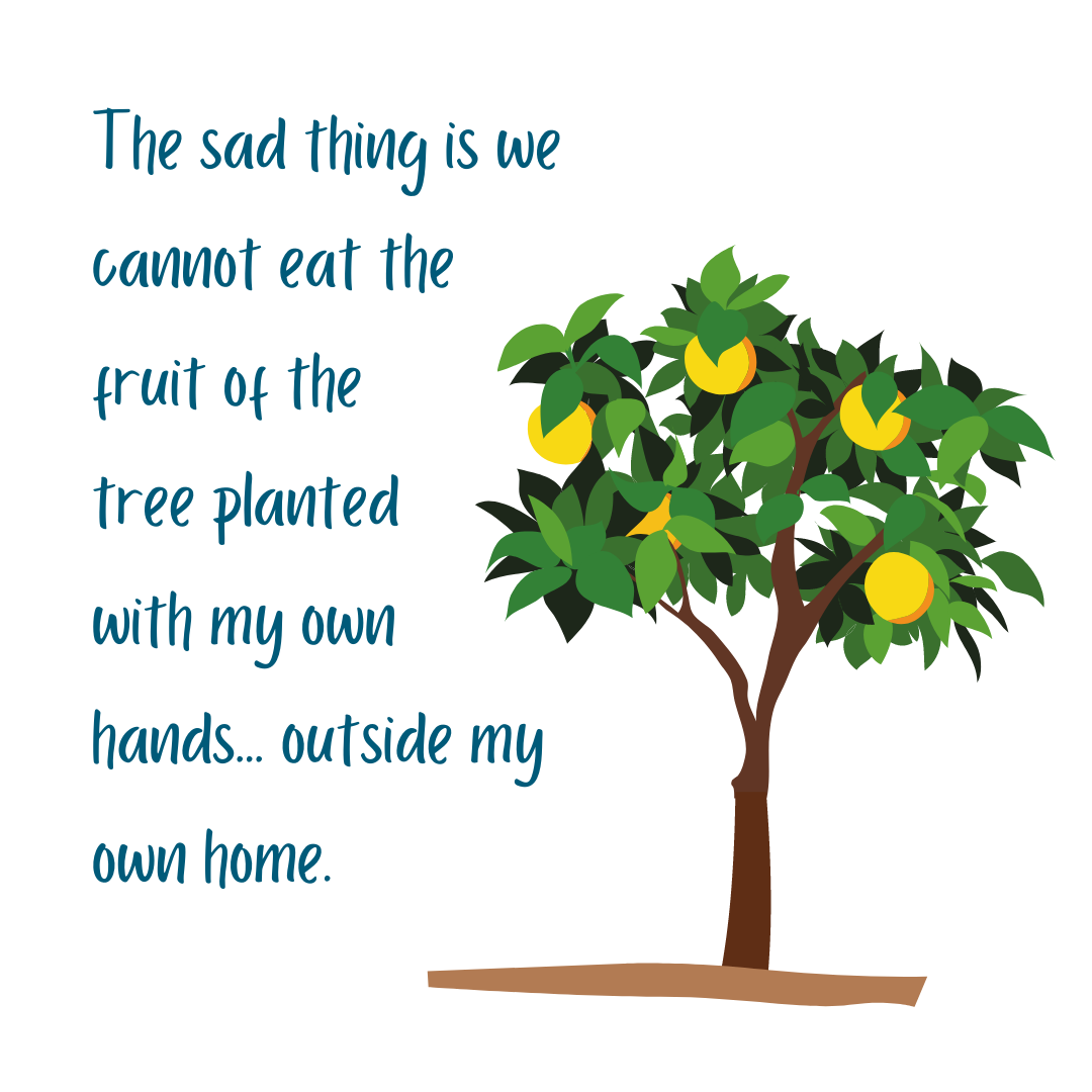 The sad thing is we cannot eat the fruit of the the tree planted with my own hands... outside my own home.