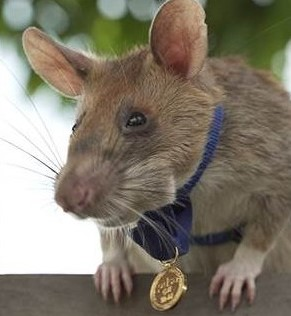 Image of Ratty with Medal