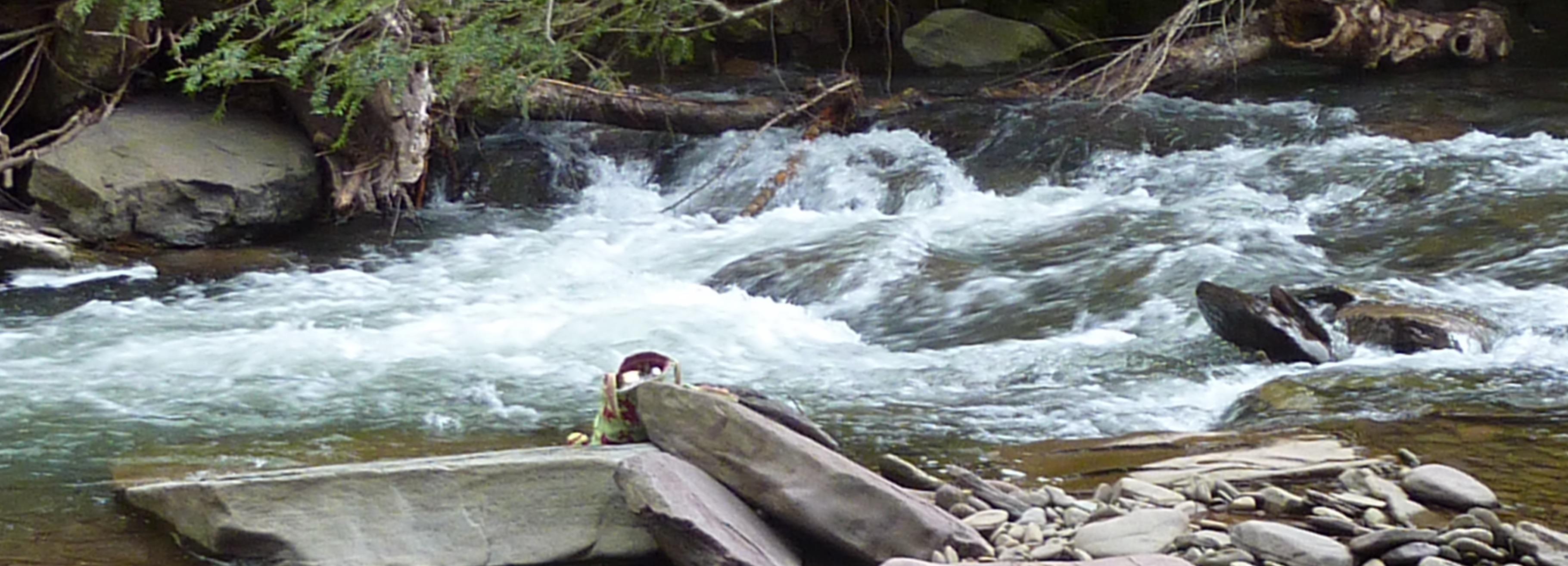 https://bluedeer.center/events/2020-08/summer-healing-retreat-in-nature