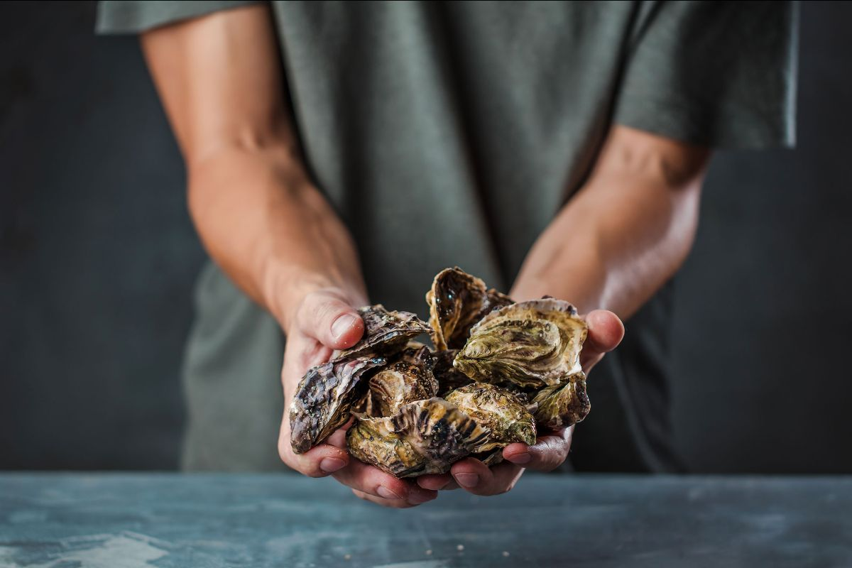 A handful of Pacific oysters