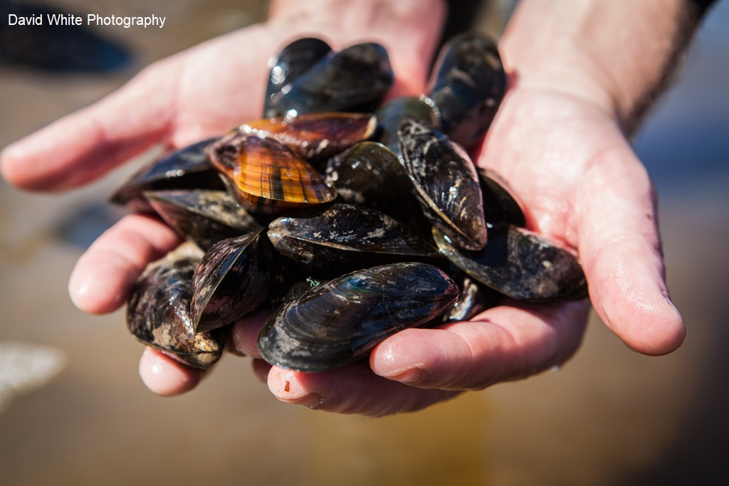 Handful of mussels