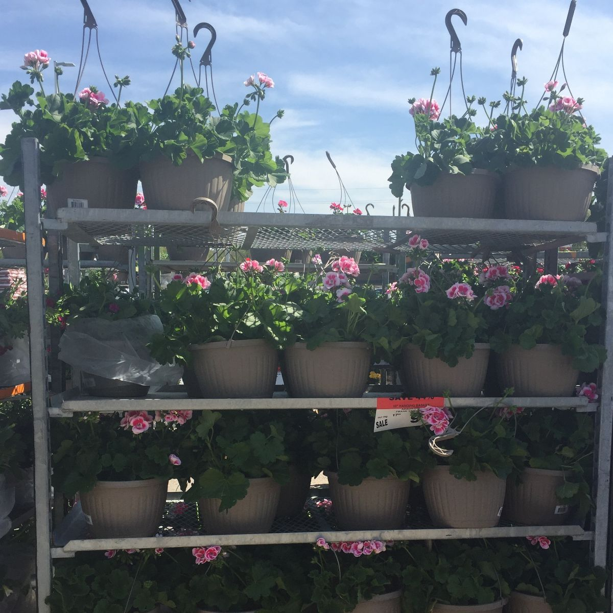 rows of hanging baskets