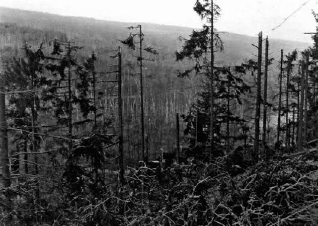 A view of a section of the forest (Photo: histomil.com)