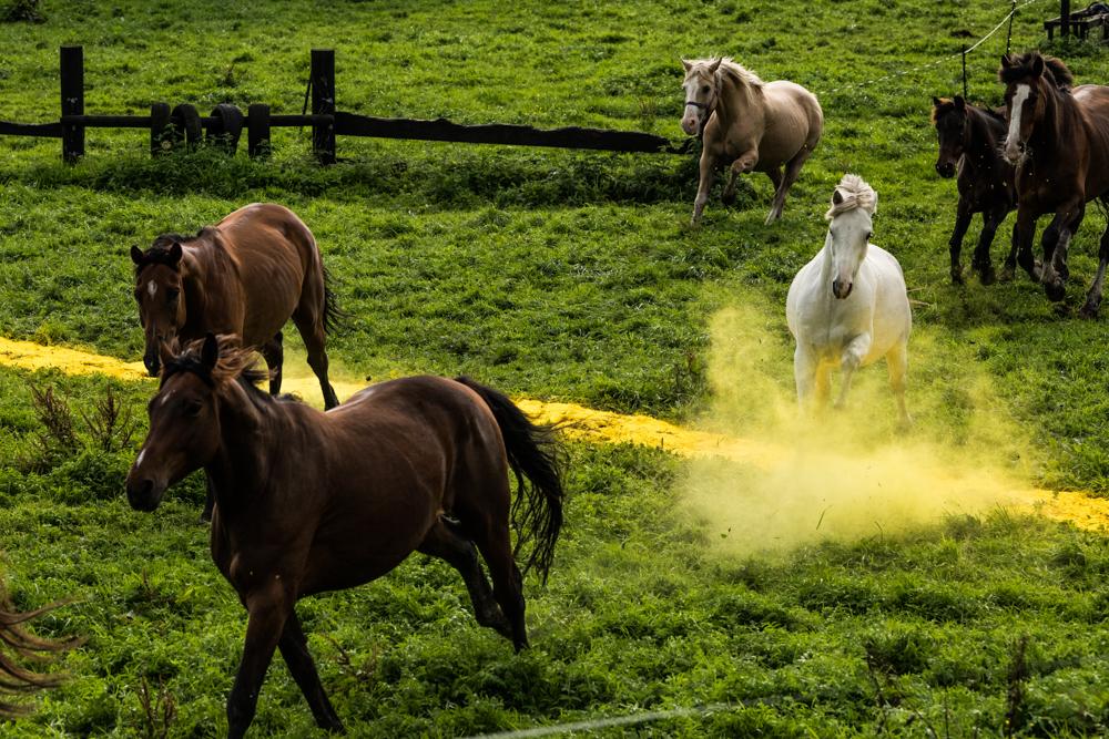 Across and In-Between_horses_photographer Helen Sloan