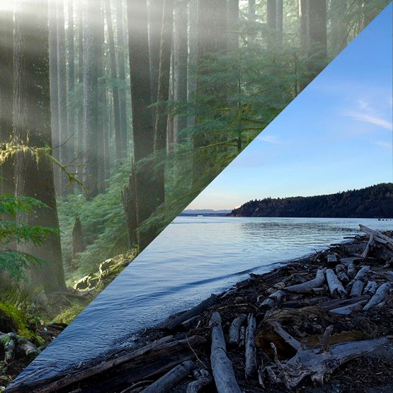 Split image with half showing trees in forest and half showing a beach with logs and driftwood along the shore.