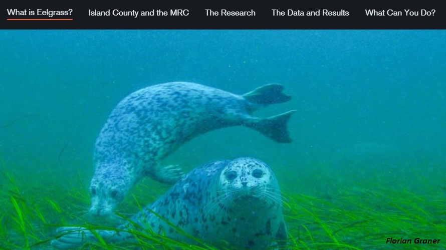 screen shot from story map showing two seals in an eelgrass bed