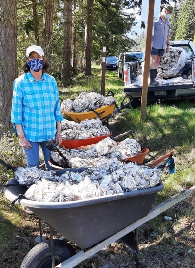 MRC volunteers with wheelbarrows full of clean oyster shell