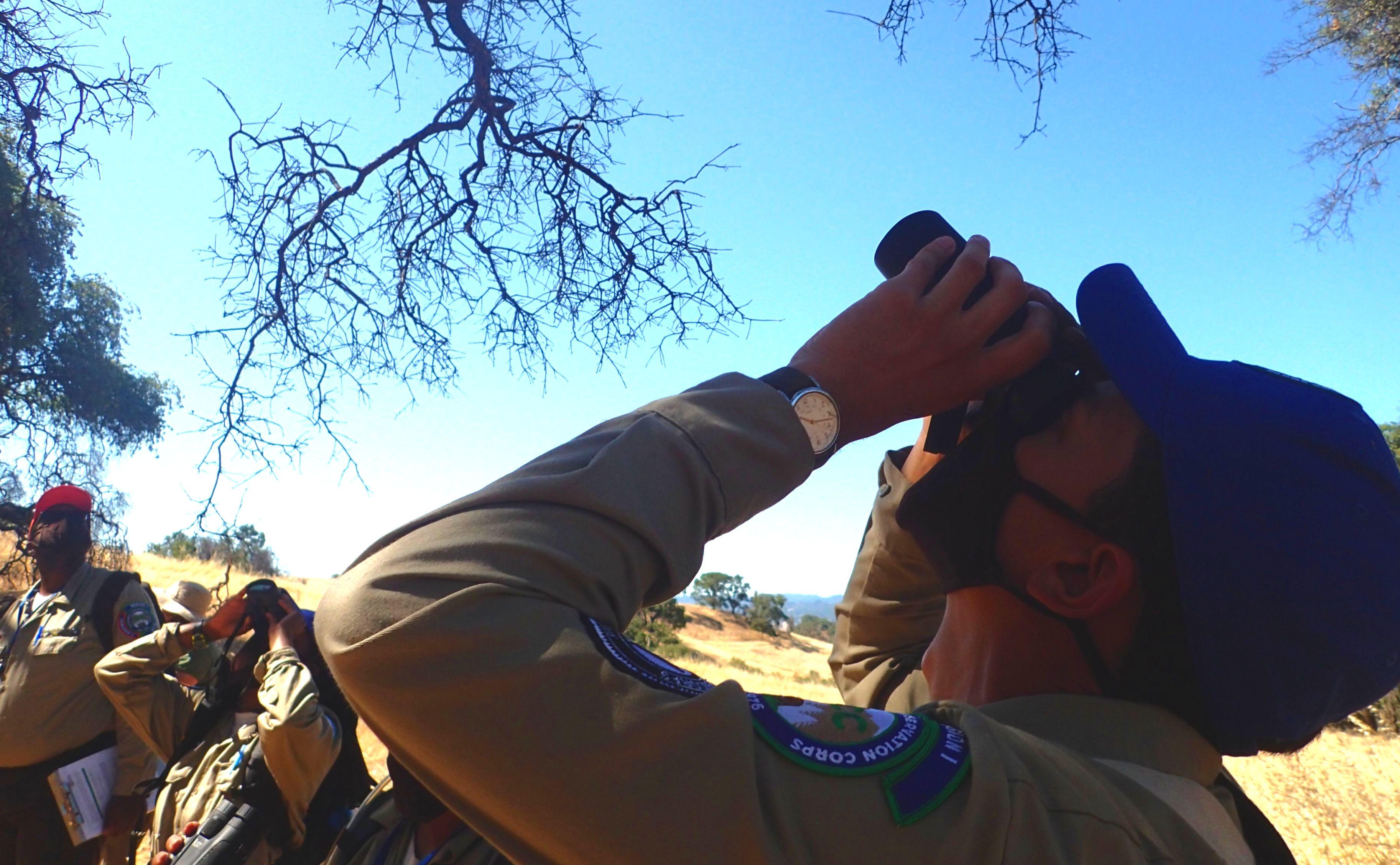 Ukiah Conservation Corp California Naturalisst look at a tree with binoculars