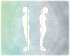 姿勢と脳の健康 全ての人にとって大切な姿勢の神経学的影響