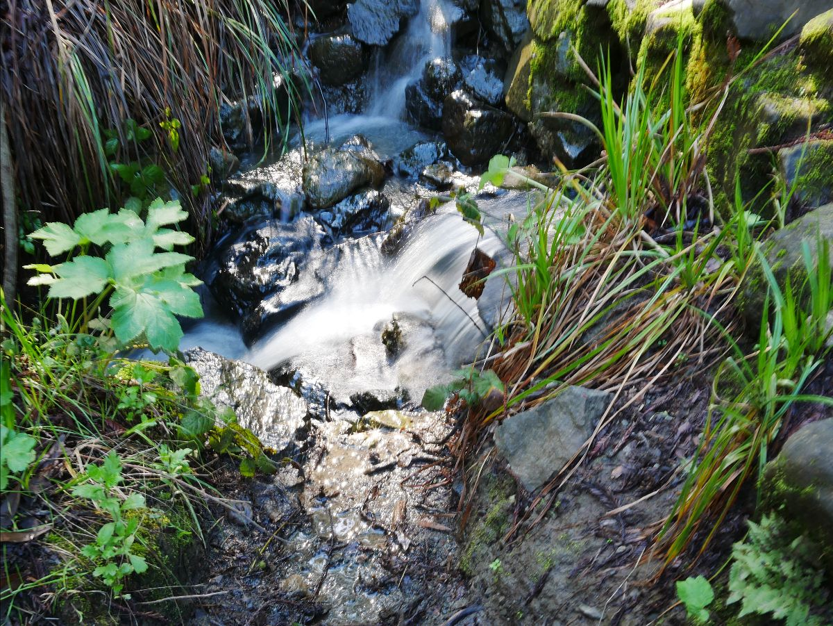 Water flowing in a small creek