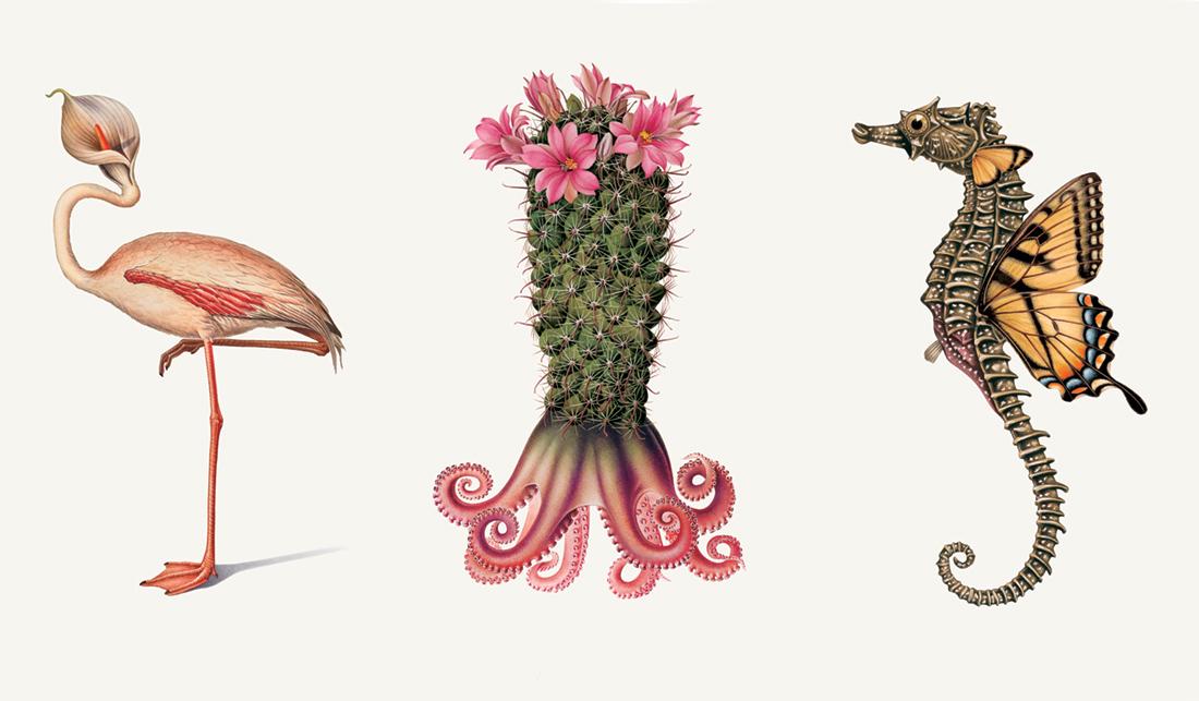 Creative Specimens 7-9