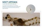 INVE Aquaculture unveils new Artemia knowledge hub