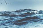 Leading industry stakeholders to develop low-emission offshore aquaculture