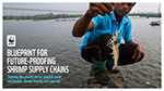 WWF's roadmap for sustainable shrimp supply chain