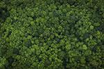 Mowi pledges deforestation-free supply chain