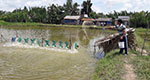 Nutritious pond feed yields more protein with lower quality feed