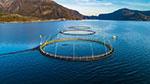 EU report predicts 17% decrease in aquaculture sales due to pandemic