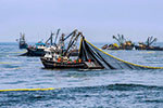 2.5 million tons for the first Peruvian anchovy fishing season