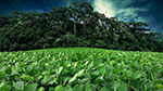 Soft Commodities Forum members surpass soy traceability target