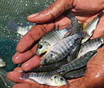 Global fisheries and aquaculture hard hit by COVID-19 pandemic, FAO reports