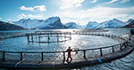 New initiative to develop novel feed sources to reduce climate emissions of Norwegian salmon farming