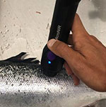Cargill's new micro NIR technology for quality testing in live salmon