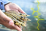 New findings on methionine chemical structure and its applications in aquafeeds