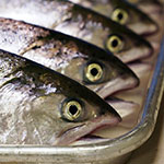 Seven-year King salmon nutrition project ends