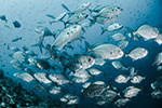 Seafood to increase by 44 million tons by 2050