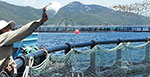 Green bonds could help solve aquaculture's greatest expense