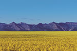 Nuseed secures Canadian feed approvals for omega-3 canola oil