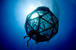 Federate court ruling sets back U.S. offshore aquaculture operations