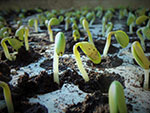 USDA lowers forecast for soybean and corn